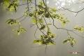 den-rooy-06082017_0084