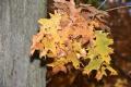 herfst2015_0018