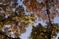 herfst2015_0053