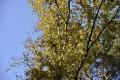 herfst2015_0066