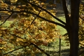 herfst2015_0135