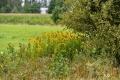 03082017-molenbeekvallei_0090