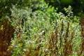 03082017-molenbeekvallei_0109