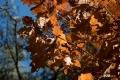 noordheuvel-31102016_0047