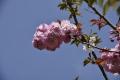 lente2015_0035