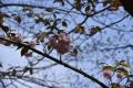 lente2015_0111