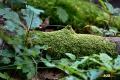 wortel-19092016_0106