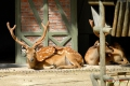 zoo-07072014_0055