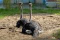 zoo-07072014_0073