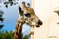zoo-07072014_0095