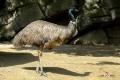 zoo-07072014_0197