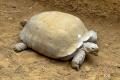 zoo-07072014_0231
