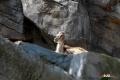 zoo-07072014_0243