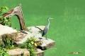 zoo-07072014_0254