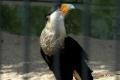 zoo-07072014_0257