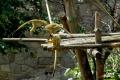 zoo-07072014_0265