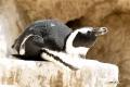 zoo-07072014_0282