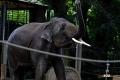 zoo-07072014_0313