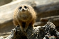 zoo-07072014_0337