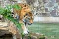 zoo-07072014_0375