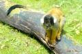 zoo-07072014_0416