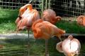 zoo-07072014_0454