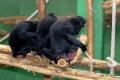 zoo-07072014_0534