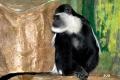 zoo-07072014_0535