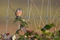 turnhouts-vennengebied_0028